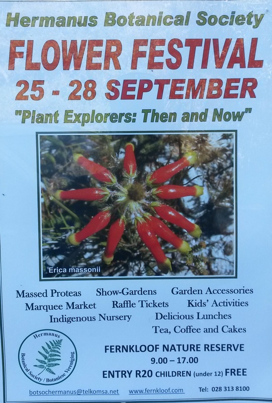 Fernkloof Flower Festival in Hermanus 2014