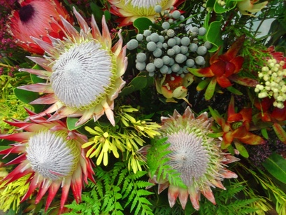 Protea Flowers at Hermanus Flower Festival