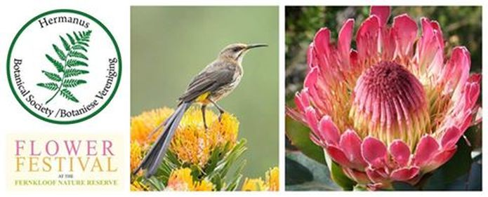 Fernkloof Flower Festival 2015 - Hermanus
