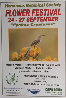 Hermanus Flower and Fynbos Festival, Fernkloof