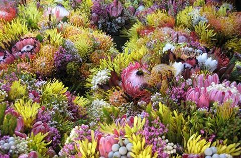 Hermanus Flower Festival