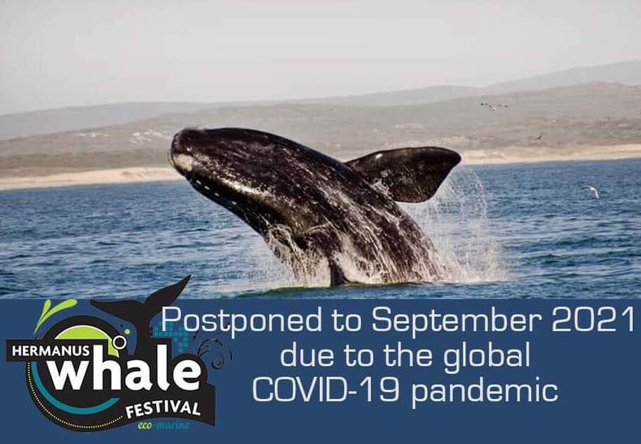 2020 Hermanus Whale Festival is postponed to 2021 due to Covid-19
